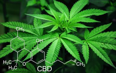 Cannabis: What Patients Need to Know