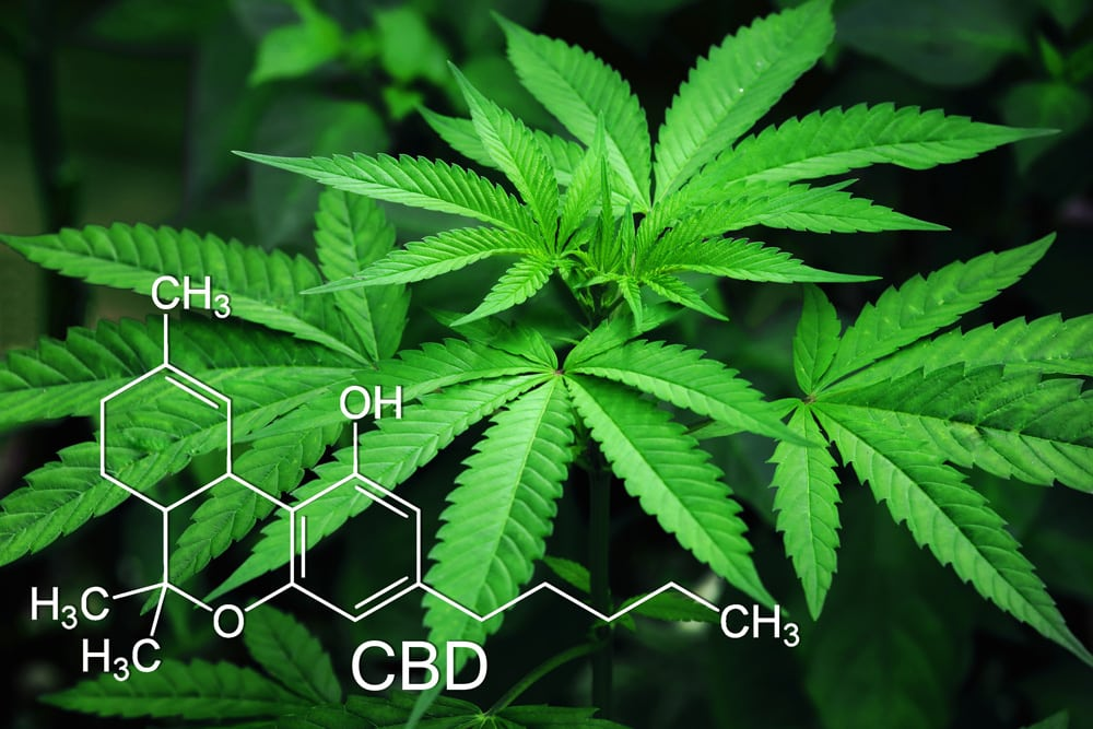 Pacific Psychiatric Centers - Blog - Cannabis: What Patients Need to Know - Featured